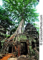 Cambodia Temple Tree Ankor Watt