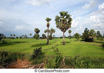 Cambodian countrside near Siem Reap, Cambodia