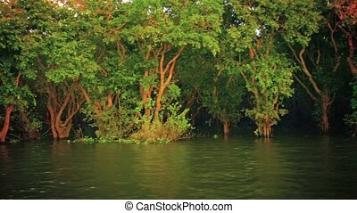 Cambodian swamp with a maze of trees along the river's edge...