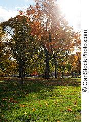 Cambridge Common in Fall portait