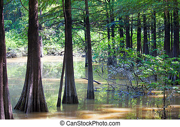 Camden WMA - Bald Cypress trees in Fourmile Slough at Camden...