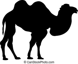 Camel - Abstract vector illustration of camel