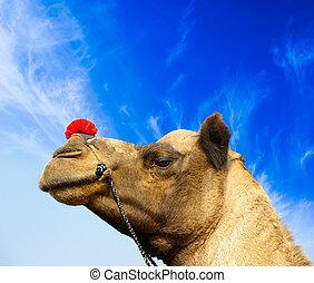 Camel animal adventure background