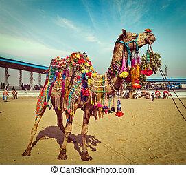 Camel at Pushkar Mela, Rajasthan, India - Vintage retro...