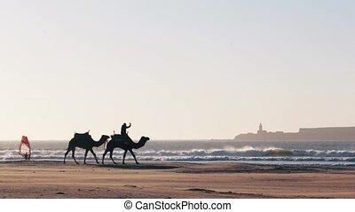 Camel Caravan on the ocean Essaouira Morocco - Camel Caravan...