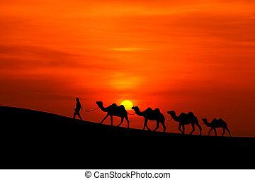 camel caravan sillhouette with sunset - camel caravan...