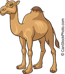 Cartoon camel isolated on a white background, vector illustration