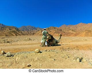Camel Desert landscape adventure background at Dahab. - ...