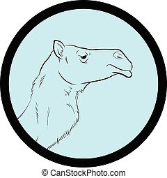 Camel Face Closeup Vector