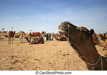 Camel Fair at Pushkar