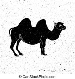 Camel hand drawn