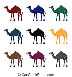 Camel icon in black style isolated on white background. Arab...