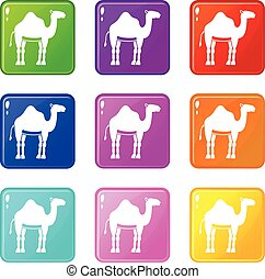 Camel icons 9 set