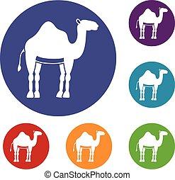 Camel icons set