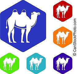 Camel icons set hexagon