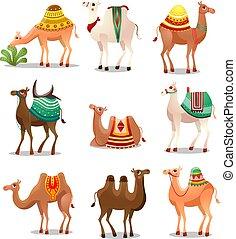 Camel Icons Set . Raster illustration in flat cartoon style