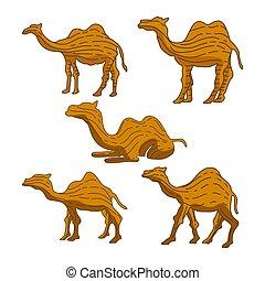 Camel Illustration Animal Vector Design