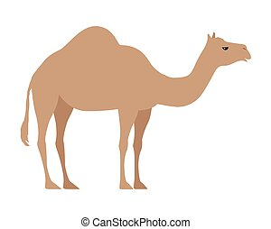 Camel Isolated on White. Even Toed Ungulate - Camel isolated...