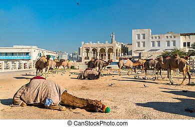 Camel market at Souq Waqif in Doha, Qatar