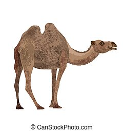 camel on a white background