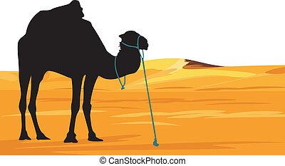 Camel on the background of desert