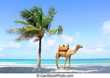 Camel on the beach