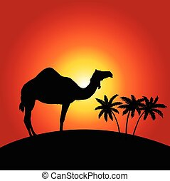 Camel on the sunset