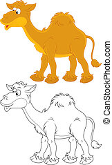 Camel - One-humped camel, color and black and white...