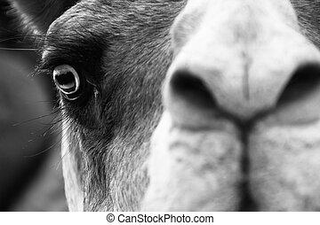 Camel portrait.