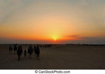camel riding at sunset