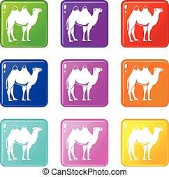 Camel set 9