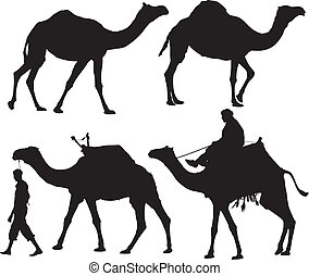 Camel Silhouette on white background