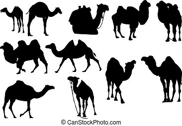 Camel Silhouette vector illustration