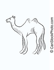 Camel sketch - camel sketch, art vector decoration