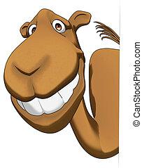 Camel - Fun camel