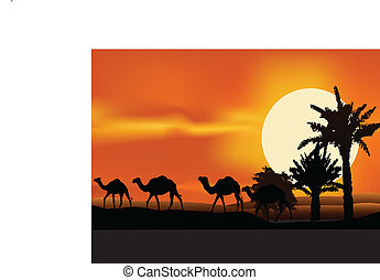 camel trip silhouette
