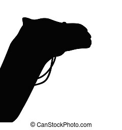 camel vector silhouette in black