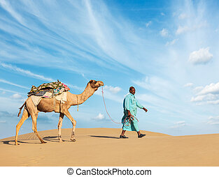 Cameleer (camel driver) with camels in Rajasthan, India -...