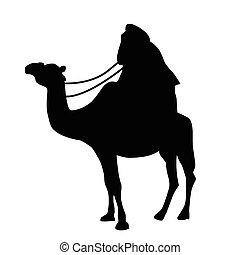 Cameleer on white