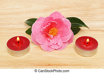 Camellia and candles