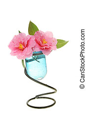 Camellia flowers in a vase
