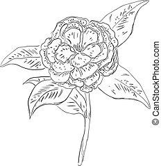 Camellia - one of the symbols of the State of Alabama, USA. ...