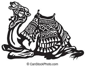 camello, acostado, silla de montar