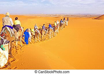 camello, dunas, caravana, marruecos, arena, yendo, por, ...