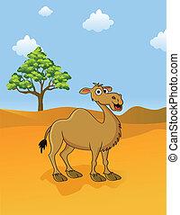 camello, sabana