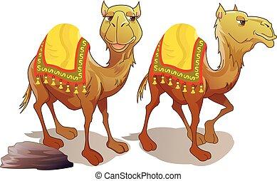 camellos, dos, ilustración