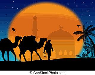camellos, en, sáhara
