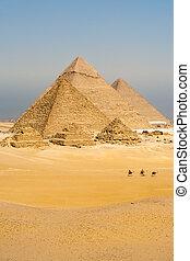 camellos, línea, caminata, pirámides, todos, vertical