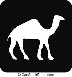 camelo, botão