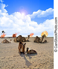 Camels and Explosions at daylight